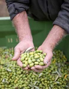 produit fermier olives d'Ardèche