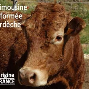 viande de race Limousine origine FRANCE